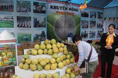 Bưởi Đoan Hùng đoạt giải thương hiệu vàng nông nghiệp 2015