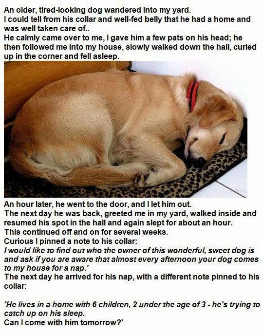 Funny Dog sleeping