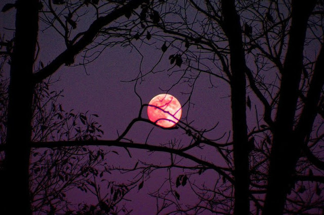 Pink-moon-in-the-month-of-march