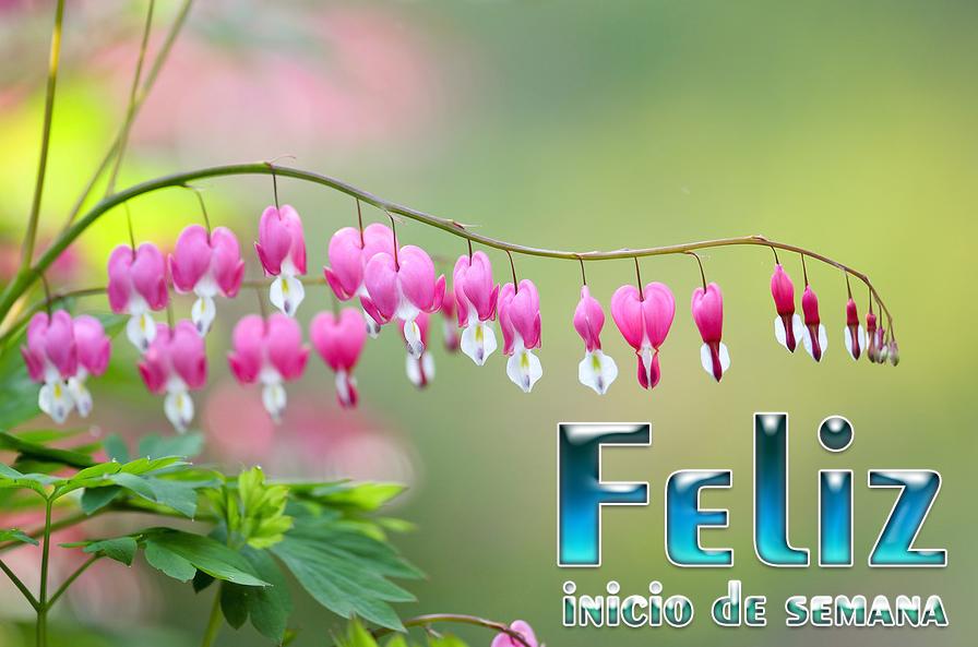 flores rosas Feliz inicio de semana