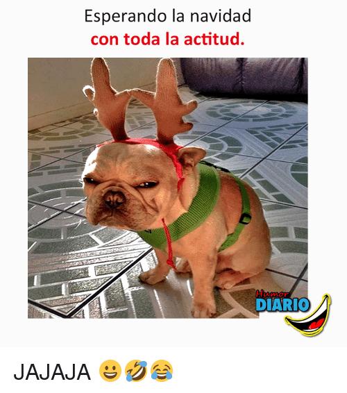 humor whatsapp perro navidad