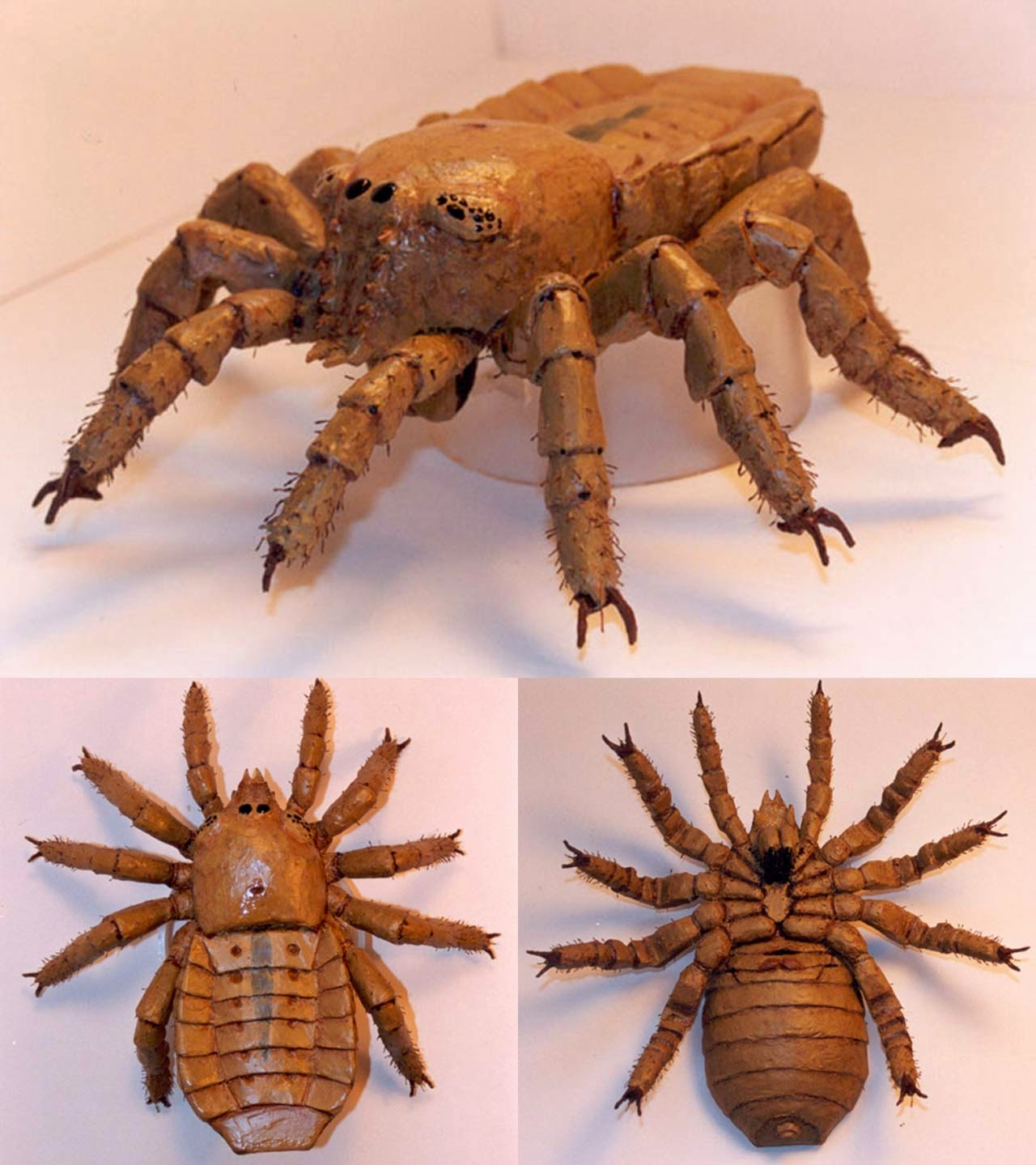 Ancient Arachnid 'brought Back To Life'