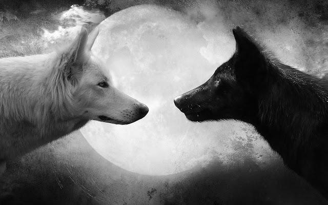 Zwart wit foto van twee wolven bij volle maan