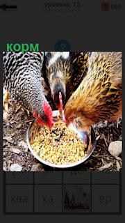 В миске насыпан корм и три курицы клюют его