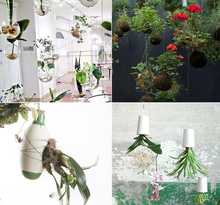 Piante sospese: Blog Arredamento Interior Design Lifestyle