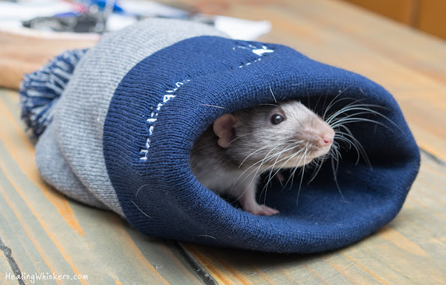 Vincent with a Healing Whiskers hat
