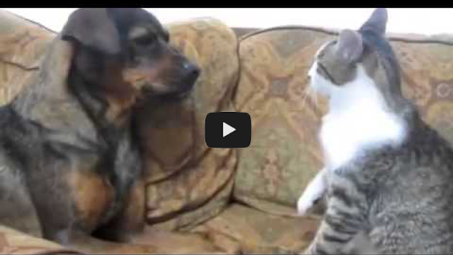 Image of: Kids Cat Vs Dog Fight Very Funny Animal Comedy Popular Videos Download Cat Vs Dog Fight Very Funny Animal Comedy Popular Videos Download