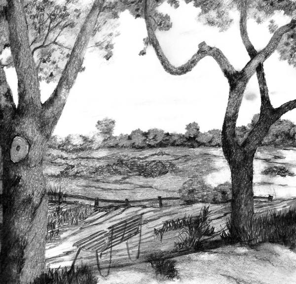 nature sketch drawing stuart john drawings wall trees 5th uploaded september which