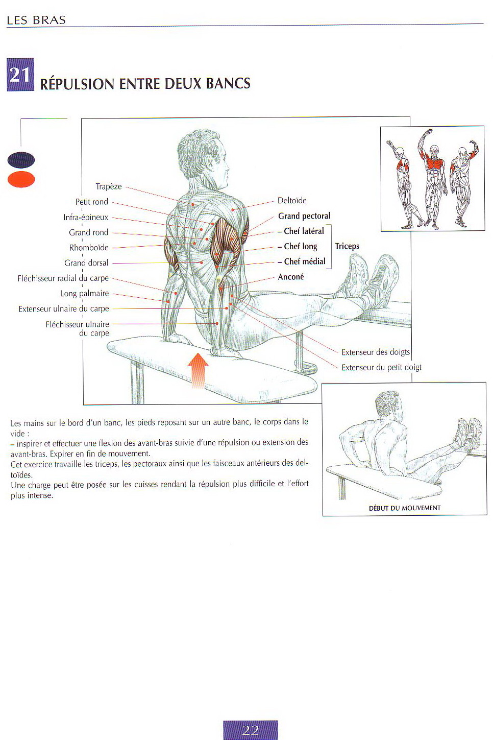 TRICEPS exercices  4fbb54817c3