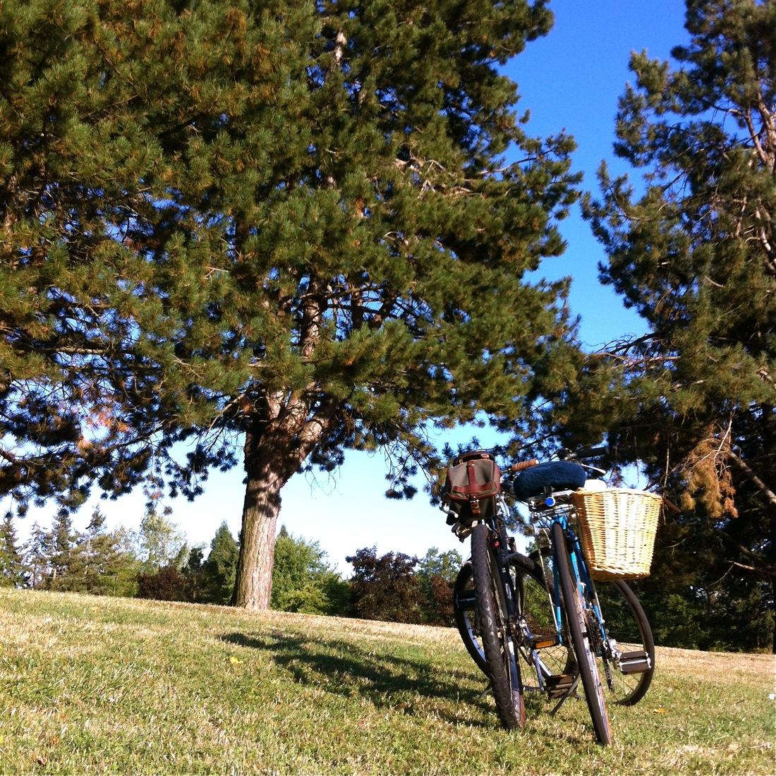 bike ride, park, city bike ride in the park, Miyata bicycle, Trek bicycle, vintage Trek single speed, old US made Trek bike frame with Bridgestone MB1 fork, homebrew single speed