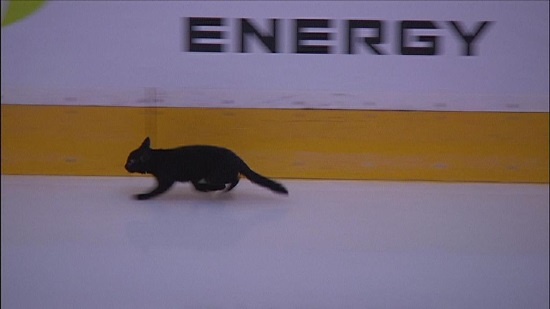 http://sanfrancisco.cbslocal.com/2016/05/02/san-jose-sharks-cat-ice-joe-paw-velski/