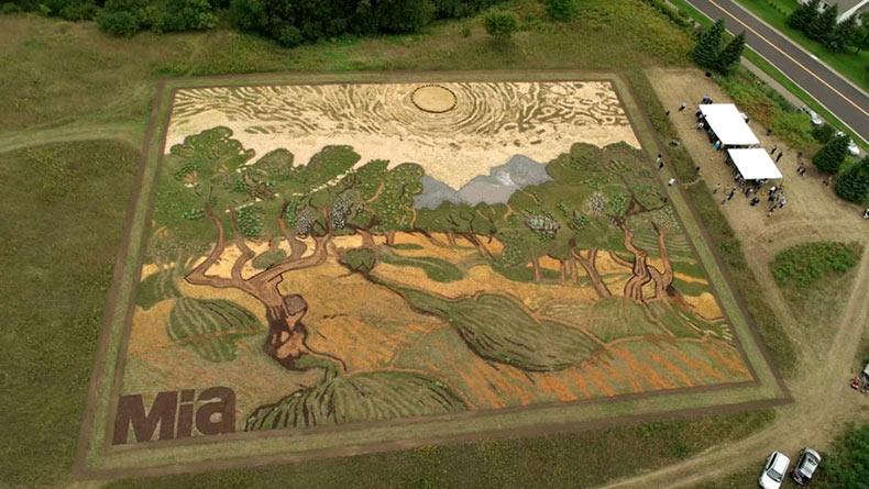 Artista paso seis períodos plantando en 1.2 acres para recrear la pintura de Van Gogh 'Olivos'