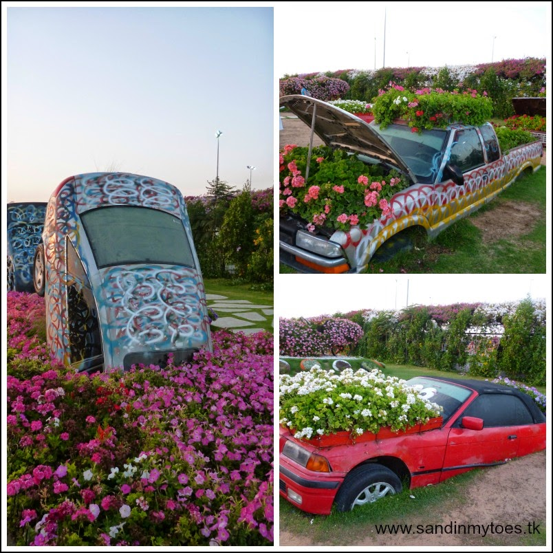 Dubai Miracle Garden cars