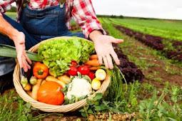 6+ Peluang Bisnis Pertanian Modern Yang Menguntungkan Di Kala Kini