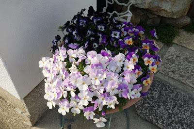 Purple flowers in Kyoto Japan