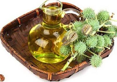Manfaat Minyak Jarak untuk Kesehatan dan Kecantikan