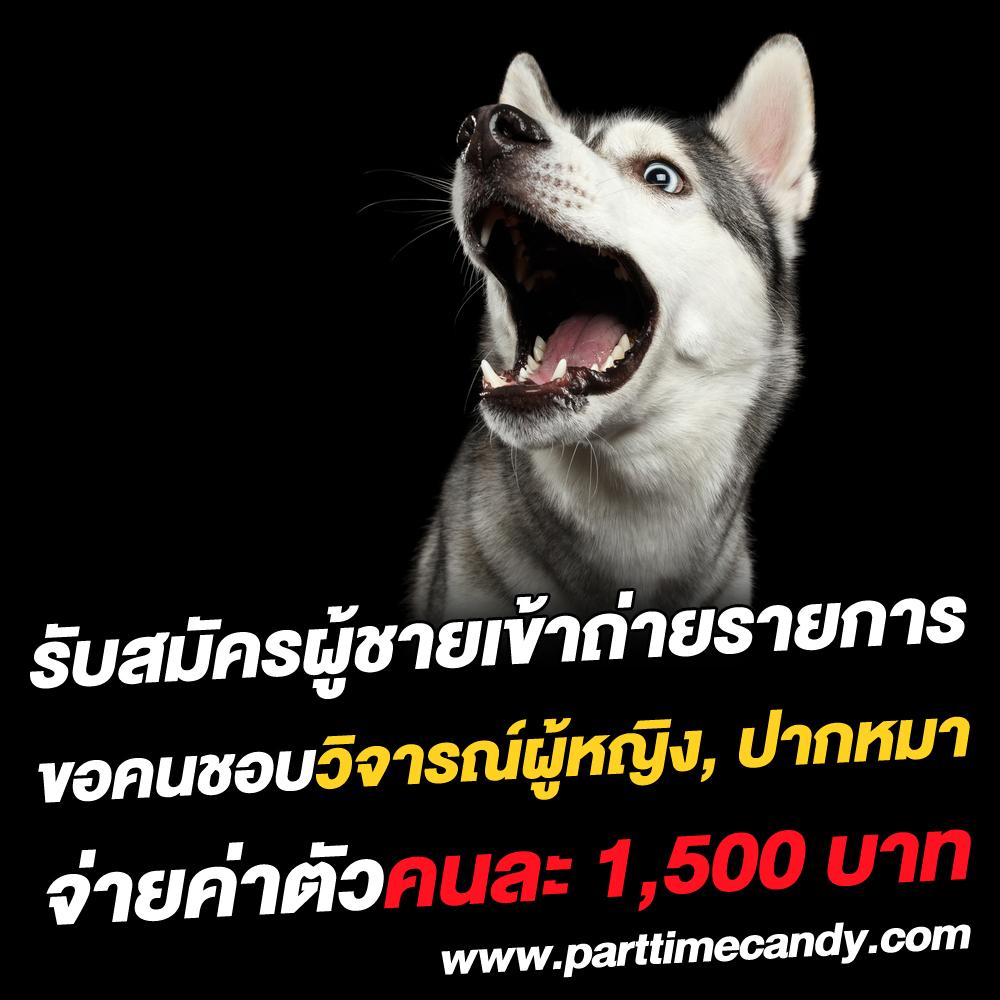 รับสมัครคนปากหมา