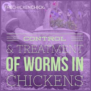 De-worming chickens, controlling worms and treatment medications dosages.