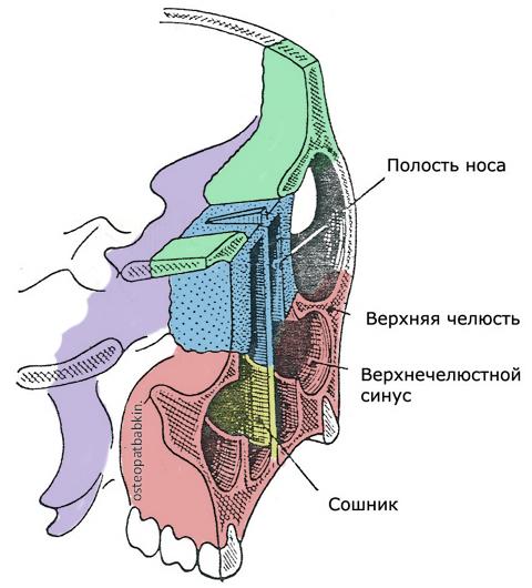 Нёбный треугольник. клиновидная кость,  лобная кость, скуловая кость, верхняя челюсть, глазничный отросток нёбной кости, решетчатая кость, слезная кость.