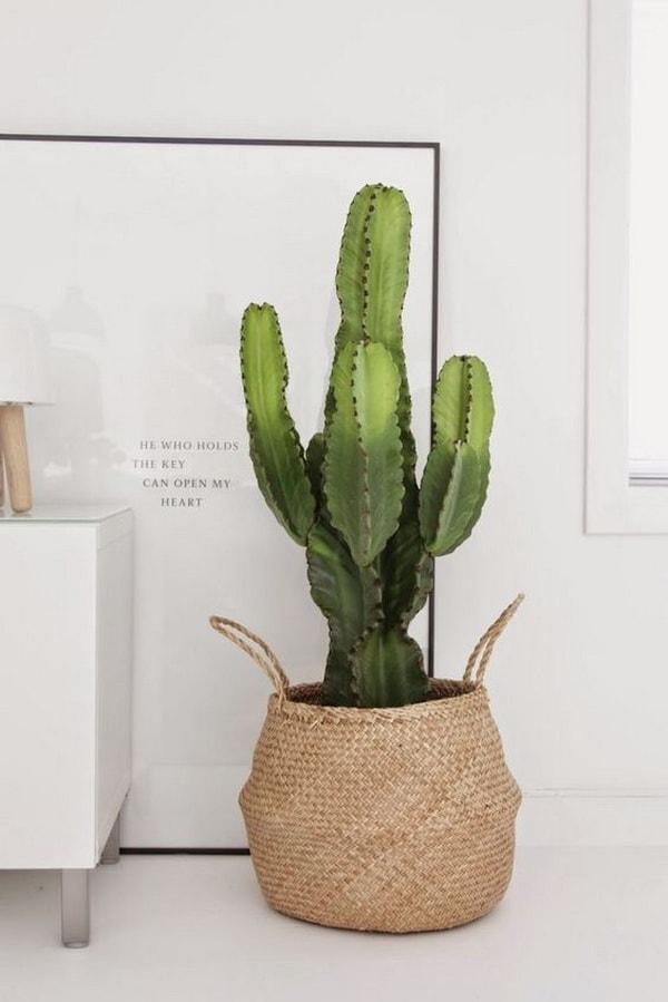 Original Ideas For Decorating Interiors With Cactus 12