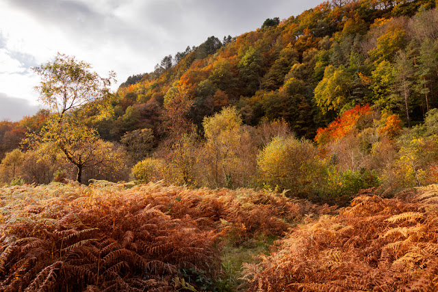 Trees in full autumn bloom rise above the Afon Mellte in the Brecon Beacons by Martyn Ferry Photography