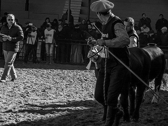 ByN.Peón arrastra a un ternero en la Exposición Rural Argentina.