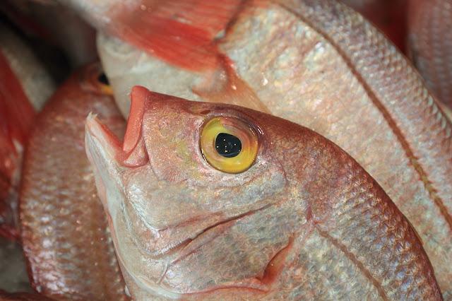 4 cara mudah untuk pastikan anda pilih ikan segar di pasar