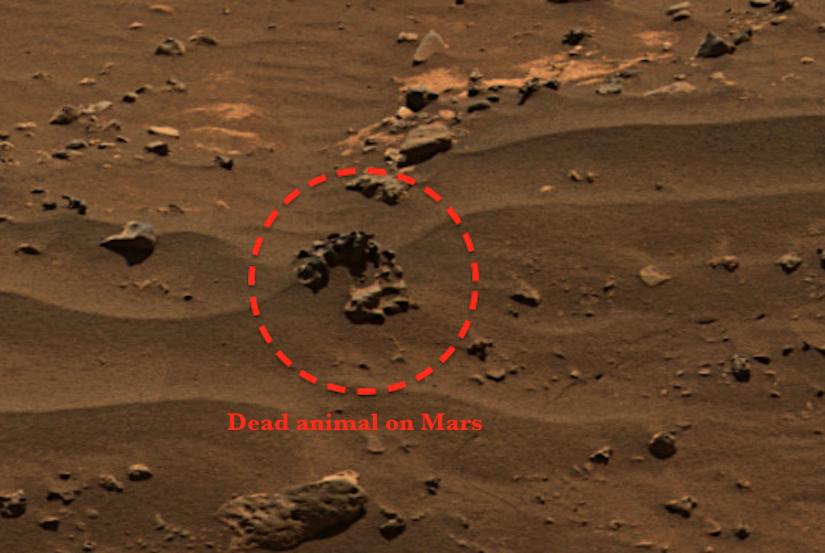 UFO SIGHTINGS DAILY NASA Rover Photo Reveals Life Once