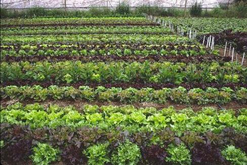 Tar m siteniz sebze bah esi haz rlama making the for Large vegetable garden