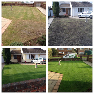 A lawn brought back to health in Goring, West Sussex