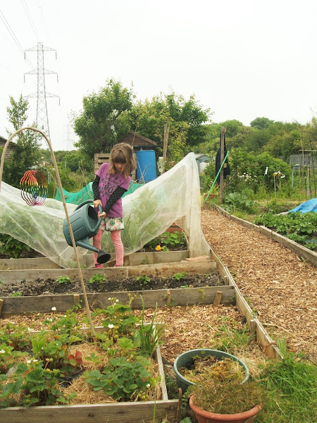 child helps to water the crops on the allotment