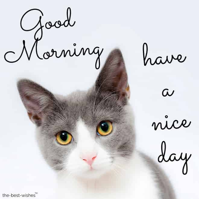 good morning with cute cat image for whatsapp