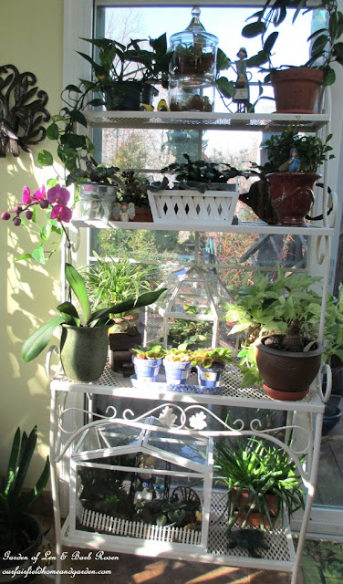 Winter Indoor Sanctuary with Houseplants