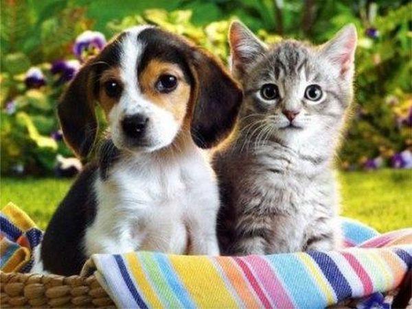 Chế độ chăm sóc tốt cho thú cưng sau phẫu thuật