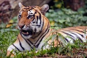 Taman Safari Indonesia di Cisarua