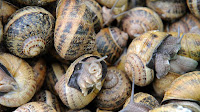 http://news.sky.com/story/1706364/snails-use-just-two-brain-cells-to-make-decisions