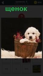 щенок в качестве подарка в корзине с ленточкой