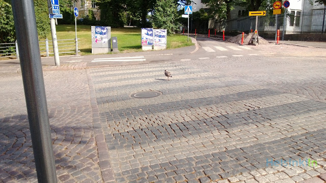 seagull crossing street on cross-walk