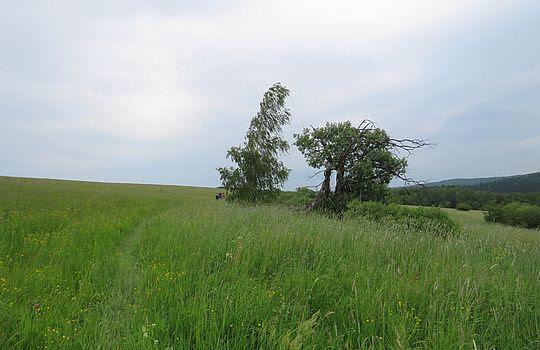 Kępa drzew.