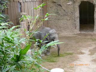 Heidelberg , Zoo in Heidelberg