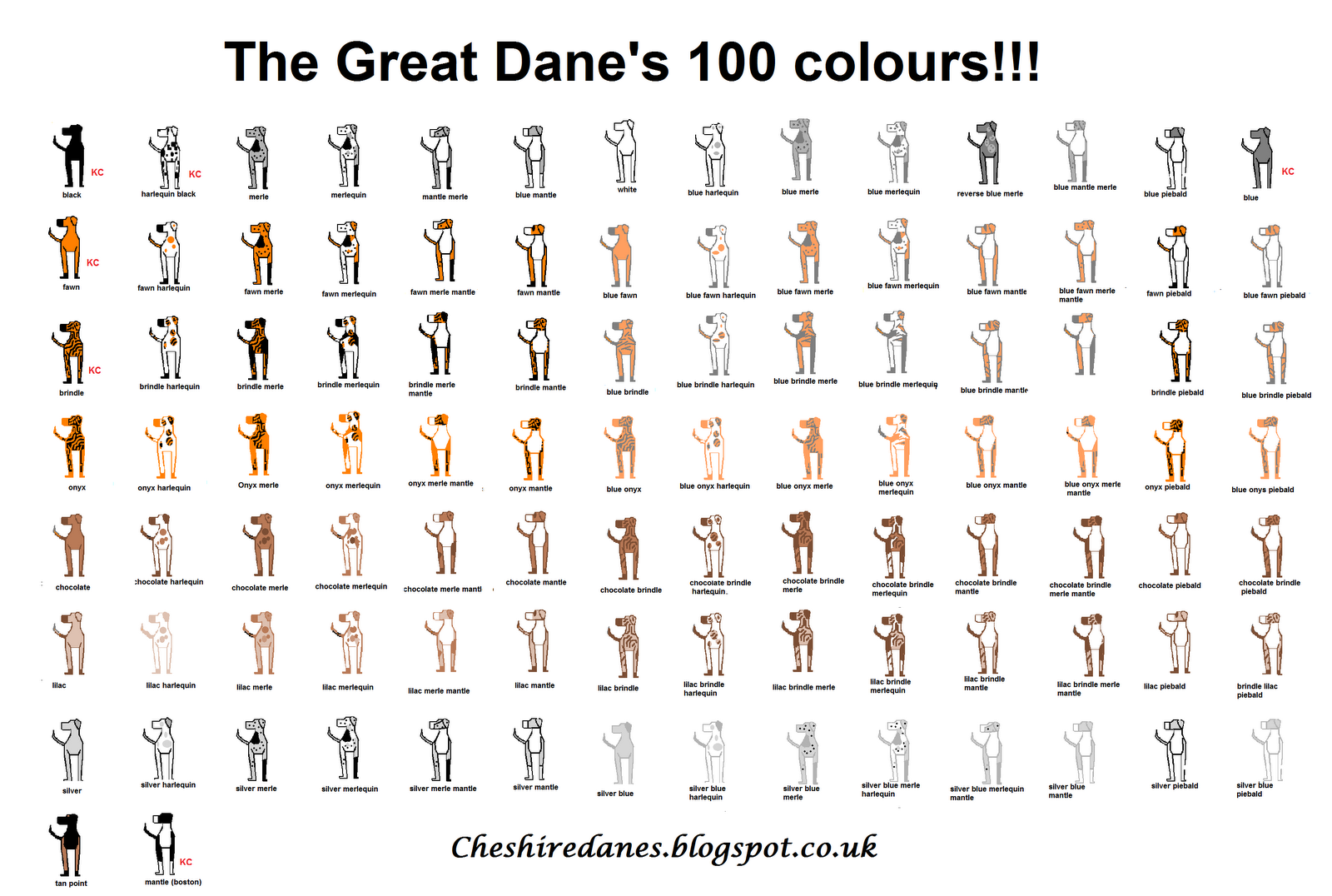 Has 100 Colors Shown My Chart Is Of Actual Danes