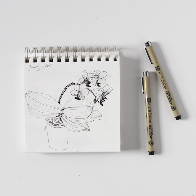 sketchbook, botanical sketches, orchids, micron pen, Anne Butera, My Giant Strawberry