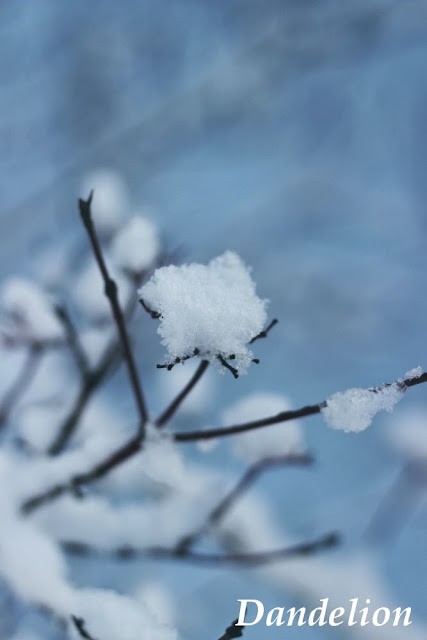 http://dandelion01.blogspot.de/2014/01/its-winter-wonderland.html