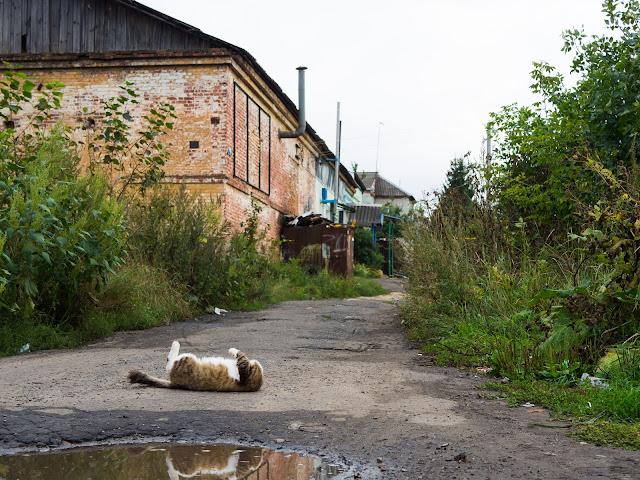 Кот возле лужи