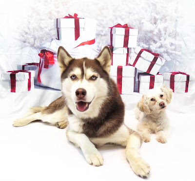 HAPPY HOLIDAYS FROM DOGS LUV US AND WE LUV THEM!