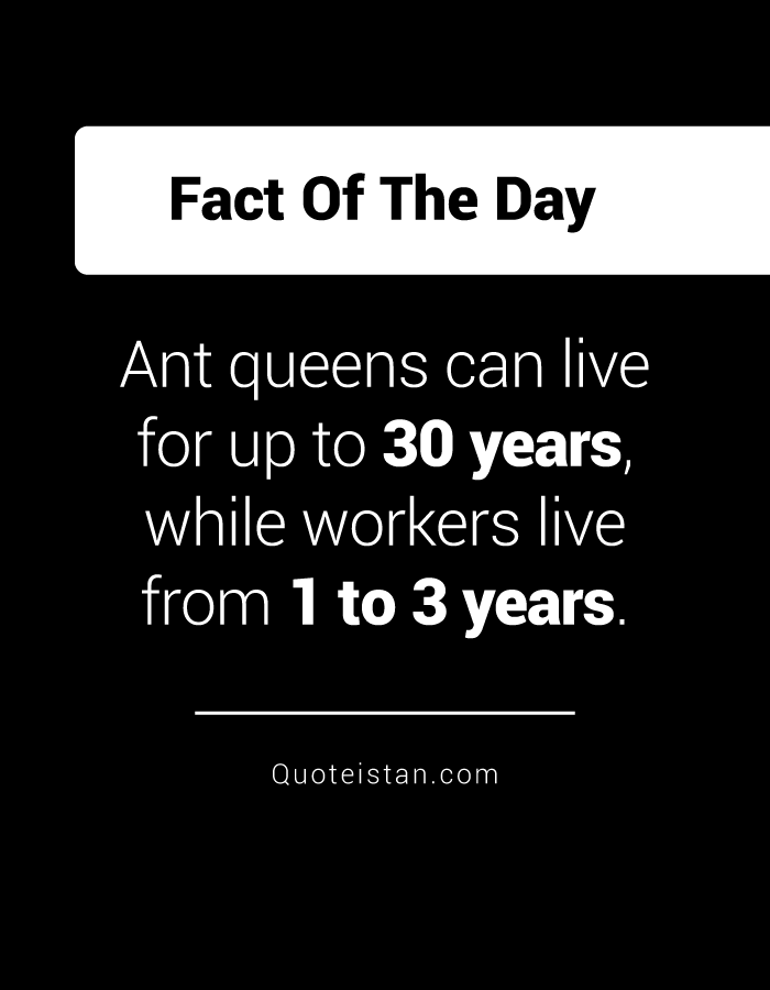 Ant queens can live for up to 30 years, while workers live from 1 to 3 years.