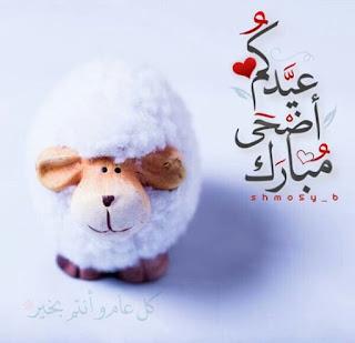 اجمل الصور خروف العيد