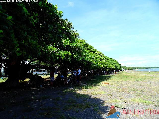 Árboles de Chilamate a la orilla del Lago Cocibolca