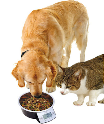 Dog and cat using the Eyenimal Intelligent Pet Bowl XL