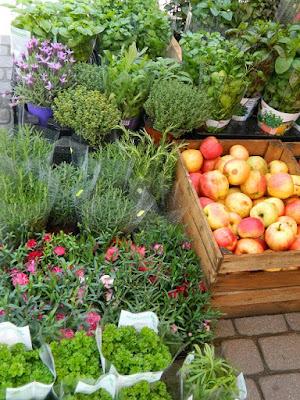 slow life, blog, ogród na balkonie, jakie rośliny
